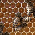 Trois conseils pour se mettre à l'apiculture