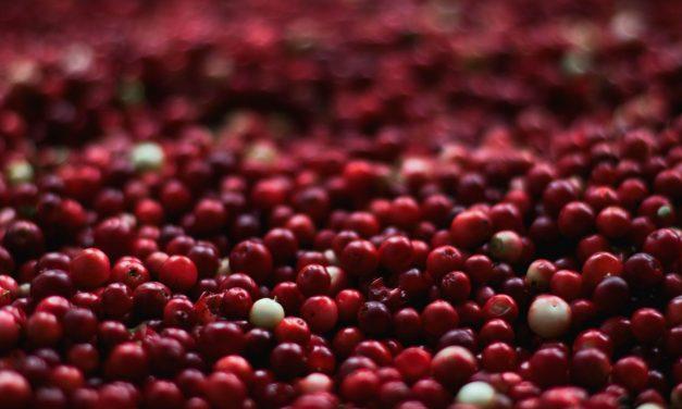 Les vertus de la cranberry