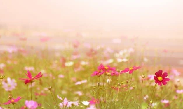 QORITIKA et les fleurs de Bach