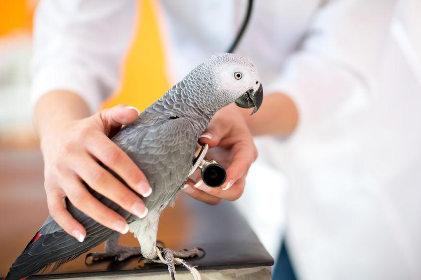 Quels sont les meilleurs soins à apporter à un perroquet?